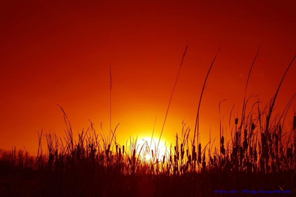 Flickr_-_law_keven_-_Long_Hot_Summer